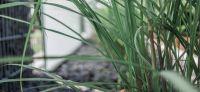 28_gabionen_sichtschutz_laermschutz_hinterpflanzung