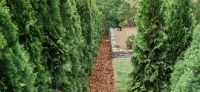 13_Heckenpflanzung