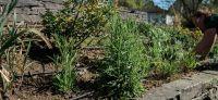15_nachher_Bepflanzung_Bewaesserungsanlage